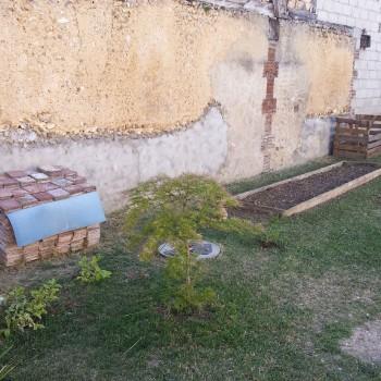 Erable-jardinet